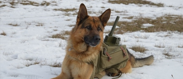 The War Dog?>